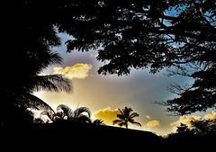 KauaiSky (Fairwood Studio) Tags: trees sunset sky landscape hawaii kauai sillouette