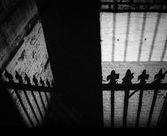 Towards the cellar (jfsouto) Tags: 03112015 18s 1955 35mmfilm blackandwhite devei3200 dilutiona ei3200 hc110 leicamp london rolleirpx400 uk voigtlandercolorskopar21mmf4 f4 film