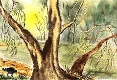 The RIVER GUMS on the MURRAY - Watercolour (elliott.lani) Tags: trees light bird art river painting landscape sketch drawing gums watercolour southaustralia murray murrayriver renmark rivergums eucualyptus
