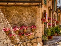 Valldemossa - Mallorca (achim-51) Tags: valldemossa mallorca spanien blumen flowers architektur gebude lumix panasonic dmcg5 lumixgvario14140f3556