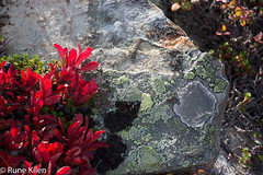 DSC_2117 - 2014-09-21 at 10-53-47.jpg (kitlo59) Tags: høst myrland råfiler