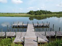 5 River Delta Alabama (15) (Stonehenge 68) Tags: 5riversdelta mobile delta wildlife alligator duck pelican water waterhyacinth hemlock snowyegret alabama