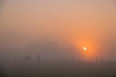 HFF! Misty morning