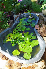 Waterlily Pond (dgardenia) Tags: garden gardenbed lawn dog pet outdoor macro lily pond waterlily rocks trellis lilypilly seedlings topiary cubbyhouse archway potplants yarnie nature