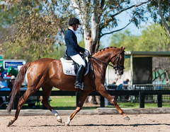 160814_Clarendon_5599.jpg (FranzVenhaus) Tags: athletes spectatorsvolunteers dressage supporters riders horses officials riding equestrian sydney newsouthwales australia aus