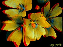 flowers...  explore (Sonja Parfitt) Tags: color manipulated