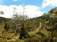 Path to Onward: Tasmania (John.Johnson.15) Tags: road blue vacation green nature walking bush skies natural hiking path australian trail pines walkway tasmania winding eucalyptus hobart tours narrow couds onwards