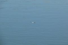 Volando (ngel Delgado) Tags: espaa water ro canon river eos sevilla andaluca spain guadalquivir agua europa europe 300d seville ave andalusia gaviota vuelo