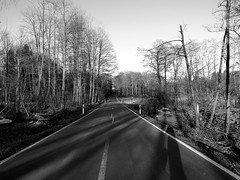 Lonely Road in the Westerwald (whitesepulchre) Tags: road trees blackandwhite monochrome canon countryside woods afternoon shadows country asphalt schwarzweiss wald bume schatten bnw westerwald blancetnoir nachmittag sx50 canonpowershotsx50