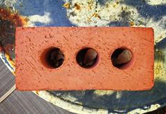 scourge of seeds (severalsnakes) Tags: brick table maple rust pentax seed helicopter missouri sedalia mx1 saraspaedy