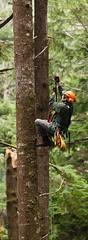 SRT climb (Eric DeBord) Tags: trees pacificnorthwest treeclimbing srt arborist cmi arboriculture