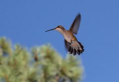 Colibr (Antonio J. Benete) Tags: road trip usa west bird monument car landscape coast us bend 66 route valley 5d horseshoe navajo estados eeuu 1635 mk3 unidos hackberri