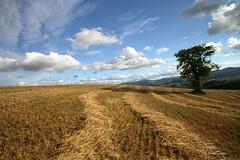 (claudiophoto) Tags: campi paesaggiitaliani lemarche marchregion countryside regionemarche paesaggimarchigiani paesaggidellemarche campidifieno raccolto nuvole fieno campidellemarche collinemarchigiane