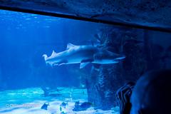 FujiXE2-0231 (QTTheory) Tags: cvg cincinnati ohio newport aquarium newportaquarium fujifilm fujinon xe2 xf 1855mmf284rlmois