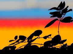 ombre (conteluigi66) Tags: luigiconte profilo nero scuro foglie sfondo