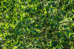 DSC03238 (Braulio Gmez) Tags: barrancadehuentitn biodiversidad caminoamascuala canyon canyonhuentitan faunayflora floresyplantas guadalajara guardianesdelabarranca huentitn ixtlahuacandelro ixtlahuacandelro jalisco mountainrange mxico mxico naturaleza paisaje senderismo sierra barrancadehuentitn barranca huentitn