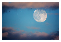 The Moon (Boris Mrdja) Tags: moon sky skyscape srbija serbia beograd belgrade nebo mesec pun full waxing gibbous birds astro astronomy luna lunar 800mm reflex mirror