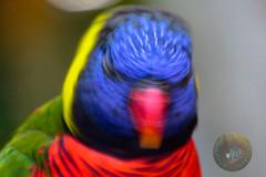 Shake Your Head! (Glotzsee) Tags: nature florida brevardcounty brevardzoo melbourne zoosofnorthamerica zoo zooanimals outdoors wildlife glotzsee glotzseefloridaimages bird birds