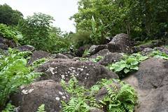 DSC_5347 (meganewens) Tags: maui iao needle sunset kaanapali lahaina hawaii digital black white waterfall