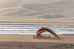 Drifting in the Wind (Matt Thalman - Valley Man Photography) Tags: water creek landscape sand colorado unitedstates wind dunes blowing driftwood sanddunes greatsanddunesnationalpark medanocreek
