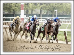 2015 Ruffian Handicap (EASY GOER) Tags: park horses horse ny newyork sports race canon track belmont mark iii running racing 5d athletes races 56 thoroughbred equine thoroughbreds 400mm markiii