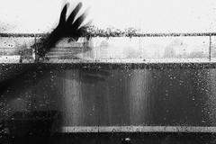 299 | Woman of the island, please send me light / Put it in an envelope, post it to L.A. (marmeladenboot) Tags: blackandwhite rain night hope hands mood nacht diane chandelier sia regen stimmung tristesse hnde hoffnung rausch thewind schwarzweis aleladiane alela marmeladenboot