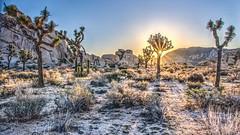 Desert Sunrise (photauGRaF) Tags: blue sunrise desert joshuatree hdr