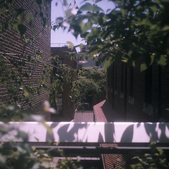 (pop archaeologist) Tags: city nyc trees newyork brick 120 film leaves fence buildings mediumformat square manhattan walls mamiyac3 highline portra400vc 65mm35