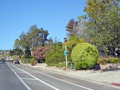 Carlsbad 7-10-16 (30) (Photo Nut 2011) Tags: carlsbad sandiego california