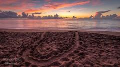 Turtle Track Sunrise (jccj58) Tags: beach sunrise seaturtle fortpierce