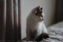 Mia. (miyukiz4 su ood) Tags: cat kitten  gttino chaton gatito ktzchen gatinho