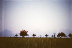 (AirSonka) Tags: trees film analog 35mm landscape outside lomo dof doubleexposure toycamera blurred multipleexposure analogue treeline smena argentique smena8m pelcula filmphotography kodakgold200 grainfield airsonka doppelbelichtung soniakaniss