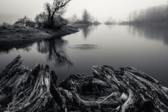 a stone's throw away (Port View) Tags: trees mist lake canada reflection tree water fog stone novascotia ripple foggy calm shore stump throw cans2s gaspereaulake fujixe2