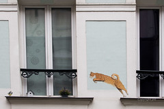 JML-2016-IMG_9209 (photo.jml) Tags: fenetre windows chat cat streetart graphiti paris animal humour