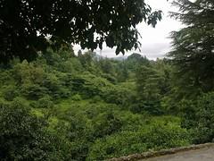 Botanical_Garden_Batumi (4) (Sasha India) Tags: travel georgia journey jardimbotnico botanicalgarden jardinbotanique batumi   gorgie excurso acara    adjara      botanikbahesi         grcstan        nbatatba          acarstan sfr