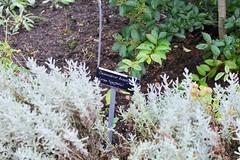 Desmodium Brachypodum (George De) Tags: london hornimanmuseum hornimangardens desmodiumbrachypodum plant
