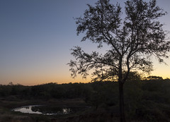 Sunset at the Watering Hole (Cocoabiscuit) Tags: cocoabiscuit nikon d7100 18300mm southafrica phinda beyond kwazulunatal animal wildlife