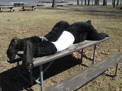 IMG_0126 (raiderwolf22) Tags: wolf shorts lakeontario fursuit hamlinbeach durandbeach raiderwolf