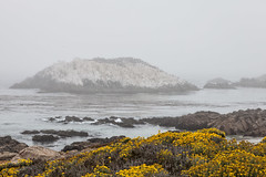A Foggy Day at Bird Rock (vincestamey) Tags: california fog monterey pacific foggy montereybay pebblebeach westcoast birdrock vincestamey