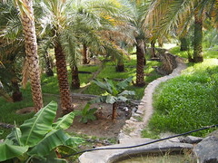 Falaj are traditional waterways or aqueducts that transport water from The mountains to lower regions in different areas. The Dhakylia region has many of these waterways thats regognized by Unesco!, Misfat Al Abreen