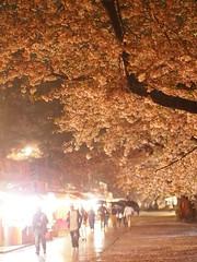 (ChihPing) Tags: park japan night olympus   sakura hirosaki f18  45mm omd     em5