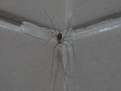 DSC05089 (familiapratta) Tags: sony dschx100v hx100v iso100 natureza inseto insetos nature insect insects