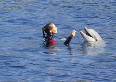 VALENCIA. DELFINARIO. (FRANCO600D) Tags: valencia canon spain sigma museo acquario spagna oceanografico delfinario eos600d franco600d