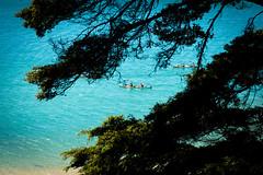 DSC_5745 (Michael.Stoner) Tags: abeltasmannationalpark tasman newzealand