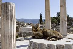 Ephesus (CRUSTINA!) Tags: turkey ancient ruin selcuk ephesus libraryofcelsus