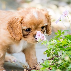 Can you handle this ? So much cuteness  #dog #cute #puppy #doglover #flower #animal (Bart Verboven) Tags: dog flower cute animal puppy doglover