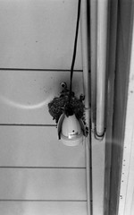 (domestic electrification) (Dinasty_Oomae) Tags: voigtlaender vitomatic vitomatic2a   2a blackandwhite monochrome   outdoor     chiba funabashi swallow    nest