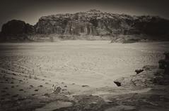 Bedouin in Contemplation (madcityfinearts) Tags: jordan wadirum bedouin desert cliffs sand sandstone landscape travel