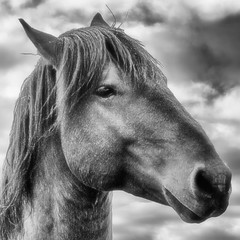 head-clouds (Wild Arizona Photography) Tags: blackandwhite wildhorses