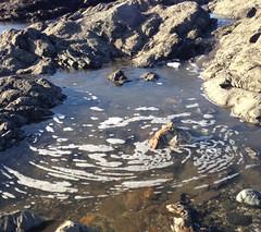 Water1 (jlizenson) Tags: beach water sand rock fish reflection tidepools tide pools tidepool pool t d e op p o l s i